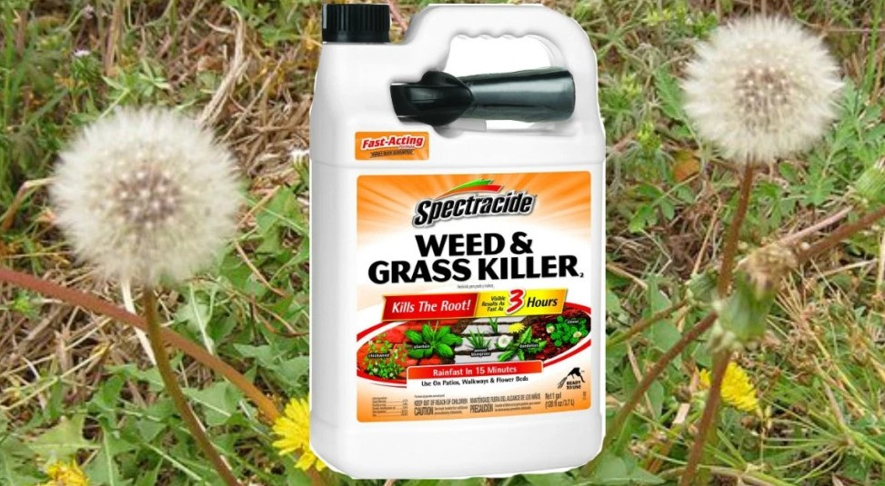 How to Use Spectracide Weed and Grass Killer?